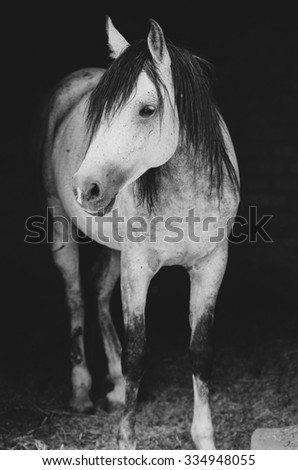 Horse (Black & White) - stock photo