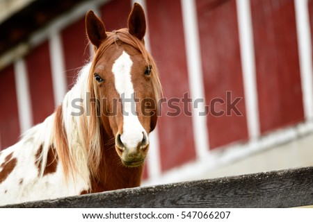Red Barn Background horse brown white colored horse red stock photo 547066207