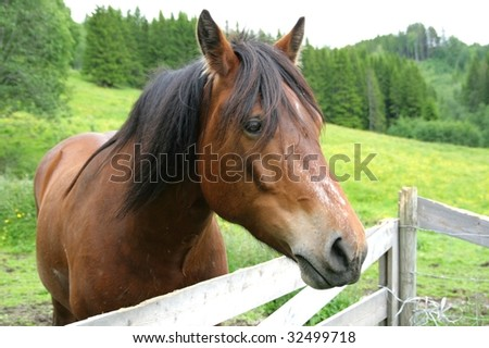 Horse by a fence - stock photo