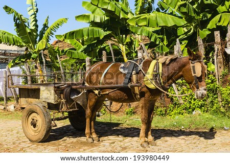 Horse carriage on streets of small colonial town Trinidad, where people still use horses and oxen for transportation and field work. - stock photo