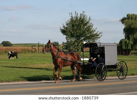 horse carrying carriage - stock photo