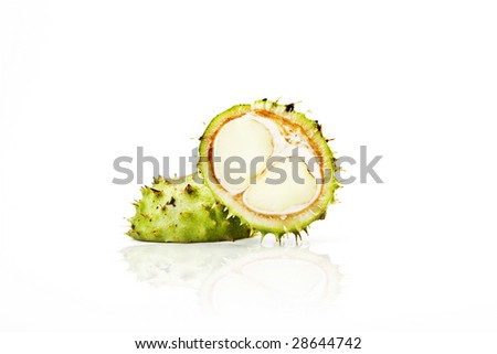 Horse Chesnut In Green Spike Case - stock photo