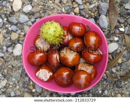 horse chestnut buckeye conker outside in a basket - stock photo