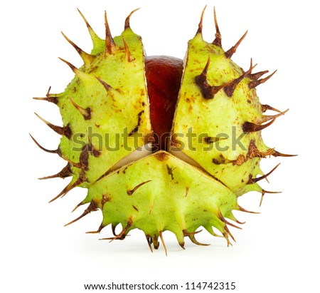 Horse chestnut conker in husk with gentle shadow. Isolated on white with clipping path. - stock photo
