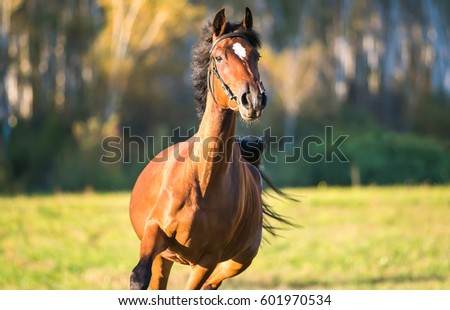 Horse chestnut galloping horse farm front stock photo 601970534 horse chestnut galloping in horse farm front view sciox Choice Image