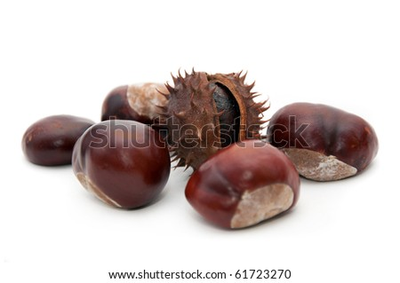 Horse-chestnut (latin - Aesculus hippocastanum), also known as Conker.