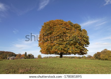 Horse chestnut tree (Aesculus hippocastanum) Conker tree in autumn, Lengerich, North Rhine-Westphalia, Germany, Europe - stock photo