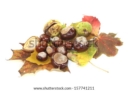 horse chestnuts with autumn leaves on a light background