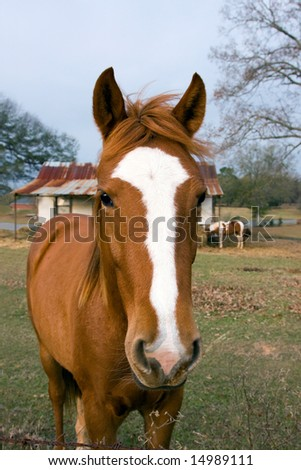 Horse Close Up - stock photo