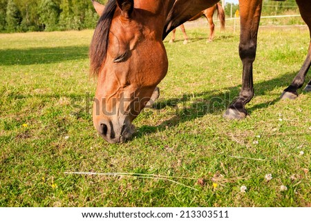 Horse close-up on the farm - stock photo