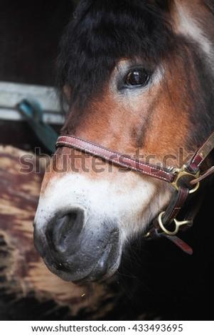 Horse close up portrait  - stock photo