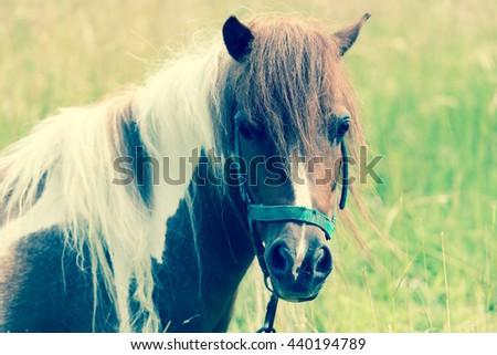 Horse close up/toned photo - stock photo