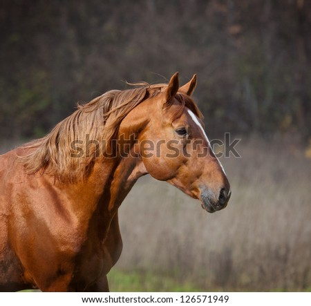 horse closeup - stock photo