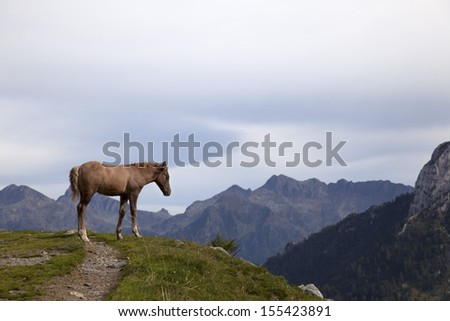 Horse  colt (Equus caballus) in the wild, italian Alps, mountain scenario. - stock photo
