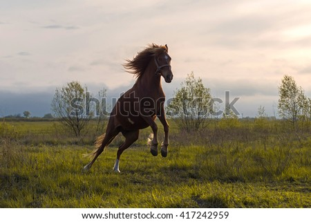 horse dances in Sunset Sun on the meadow