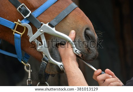 Horse dentist at work