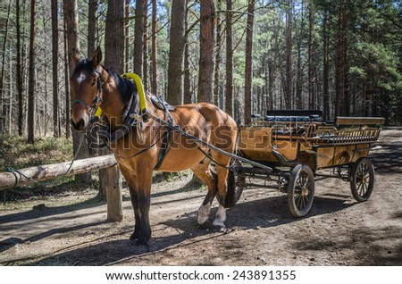 Horse-drawn carriage in close up - stock photo