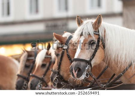 Horse-drawn carriage in the town square of Salzburg - stock photo