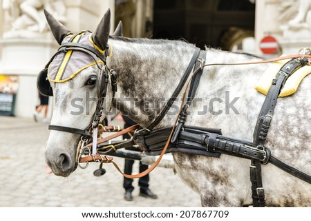 Horse drawn carriage in Vienna waiting for a drive - stock photo