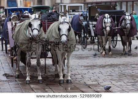 Horse drawn carts carriage in the streets of the city in anticipation of tourists