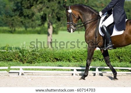 Horse dressage - stock photo