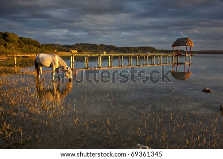 horse drinking from lake at sunset