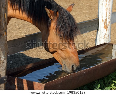 Horse drinking from trough  - stock photo