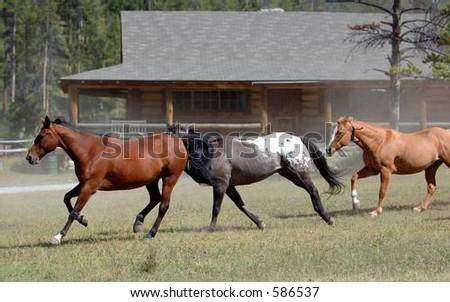 Horse Drive #3 - stock photo