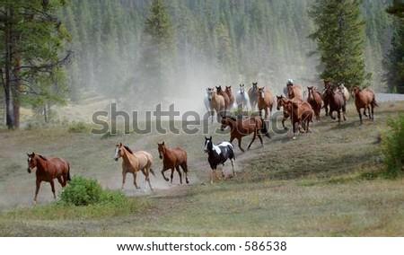 Horse Drive #1 - stock photo
