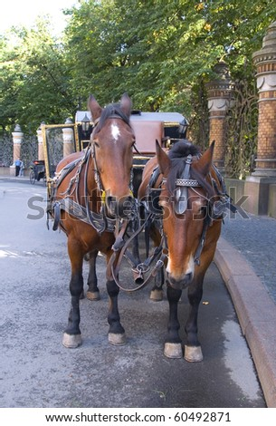 Horse-driven carriage at Saint Petersburg