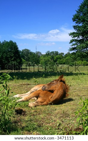 Horse during relax - stock photo