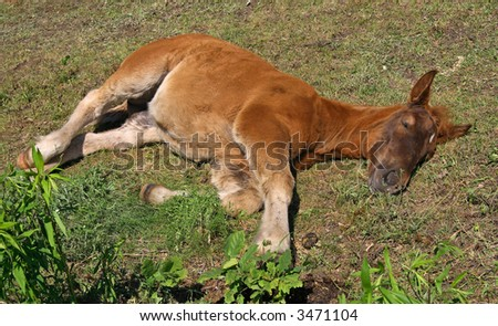 Horse during relax in field - stock photo