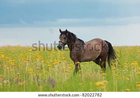Horse eat a green grass in the field