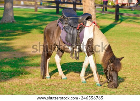 horse eat grass of field in the farm - stock photo
