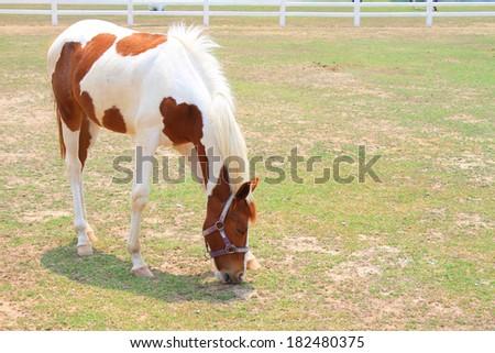 horse eat ranch scene  - stock photo