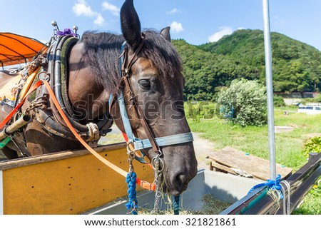 Horse eating dry grass - stock photo