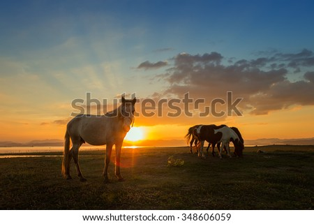 Horse eating grass on beside river at sunset - stock photo