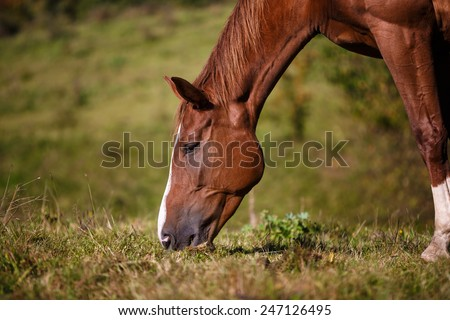 Horse eating grass on the field at summer time - stock photo
