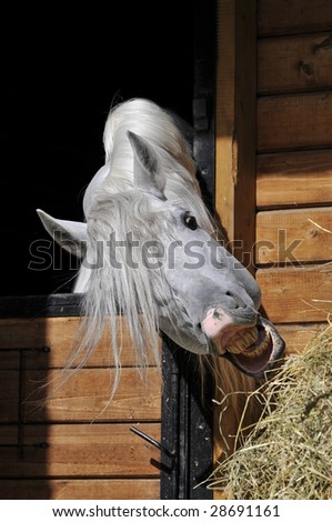 Horse Eating Hay - stock photo
