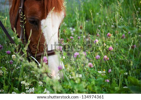 Horse eating in meadow - stock photo