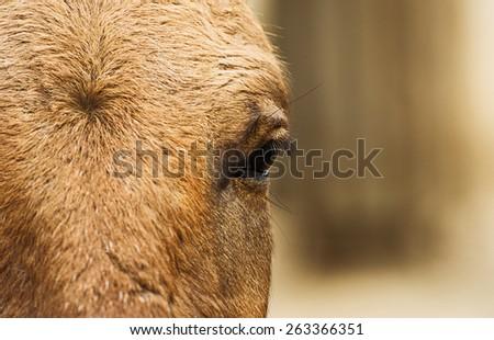 horse eye - stock photo