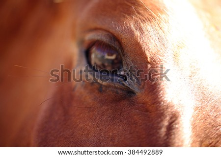 Horse eye close up - stock photo