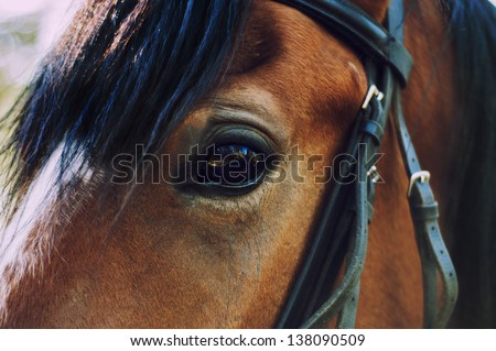 horse eye.close up.brown color - stock photo