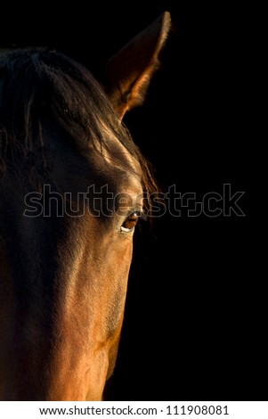 horse eye close up on black background - stock photo