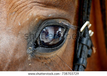 horse eye, horse, brown, color, black and white