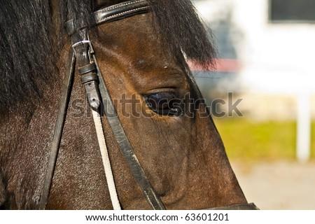 Horse face - stock photo