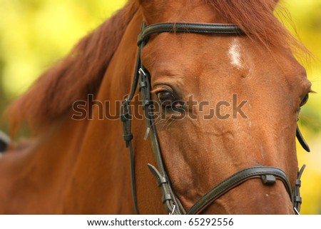 Horse face and eyes close in the autumn background - stock photo