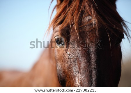 horse face close-up - stock photo