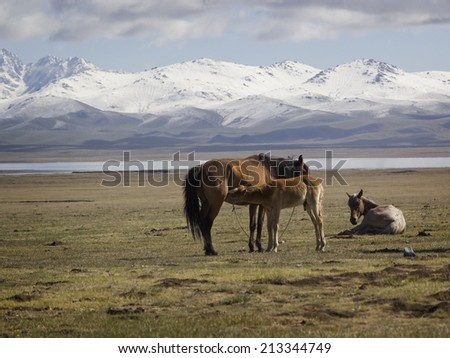 Horse family in the pasture in the foothills of the Tien Shan, Kyrgyzstan.  - stock photo