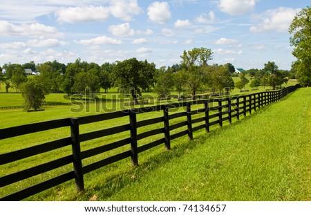 horse farm - stock photo